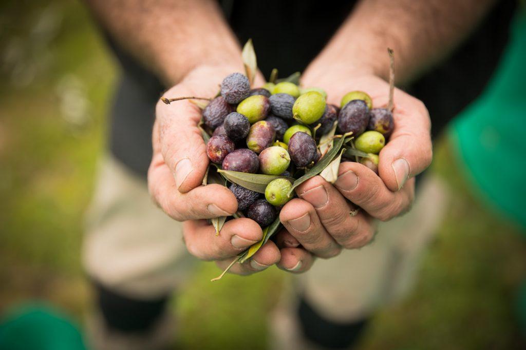 El Consell Comarcal impulsa les empreses agroalimentàries amb la nova edició d'un programa de formació i assessorament