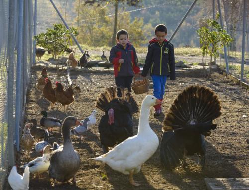 Bagesturisme promou una campanya perquè els infants coneguin el territori