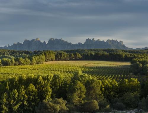 Bages Turisme impulsa un projecte per convertir la comarca en una destinació enoturística de referència