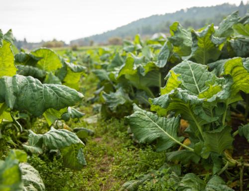 El Rebost del Bages ajuda a 5 empreses agroalimentàries a créixer i consolidar el negoci